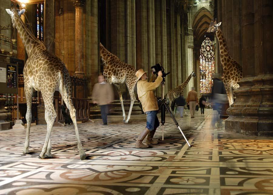 Duomo-safari-Herreman