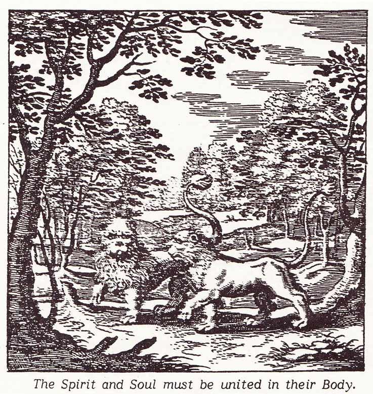 Sun-Lion-Alchemy